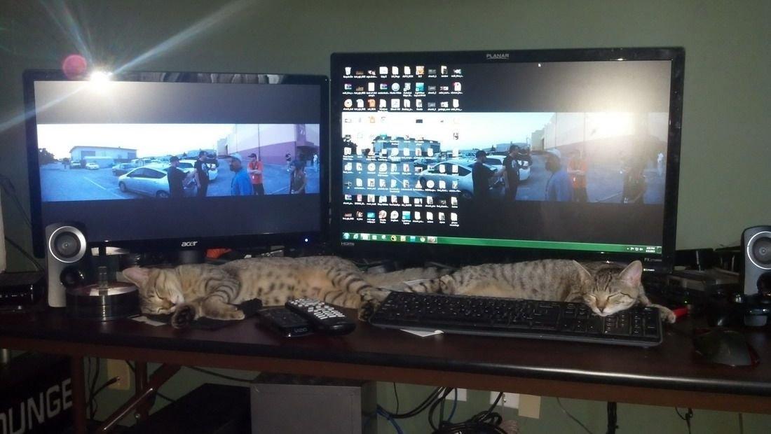 Коты геймеры устали гамиться