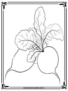 lembar mewarnai gambar sayuran lobak