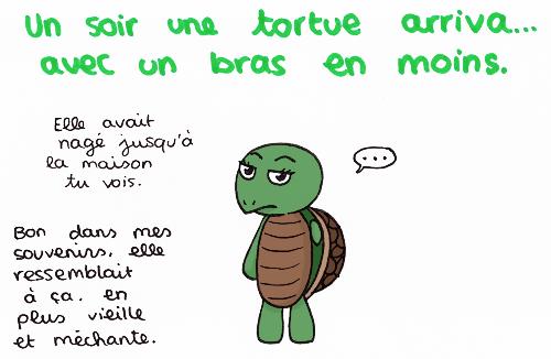 Parfois les mots manquent parfois les sentiments for Avoir une tortue a la maison