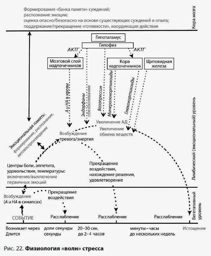 Три волны стресса: динамика стресса и психофизиологические механизмы