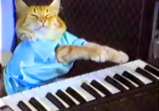Piano-playing cat - Fatso