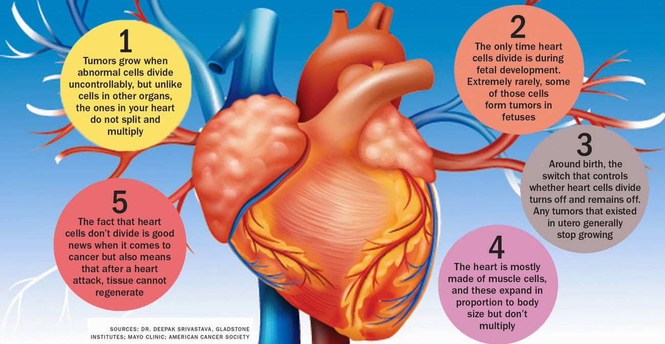 How to Detect Cancer in Your Heart