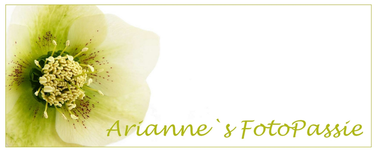 Arianne`s FotoPassie