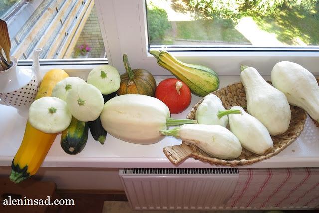 кабачки, патиссоны, тыквы, тыквы-спагетти, спагетти, большой урожай тыквенных, бахчевых, аленин сад