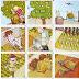 Пазл. Как выращивают овощи и фрукты