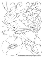 grasshopper free insect coloring pages for kids