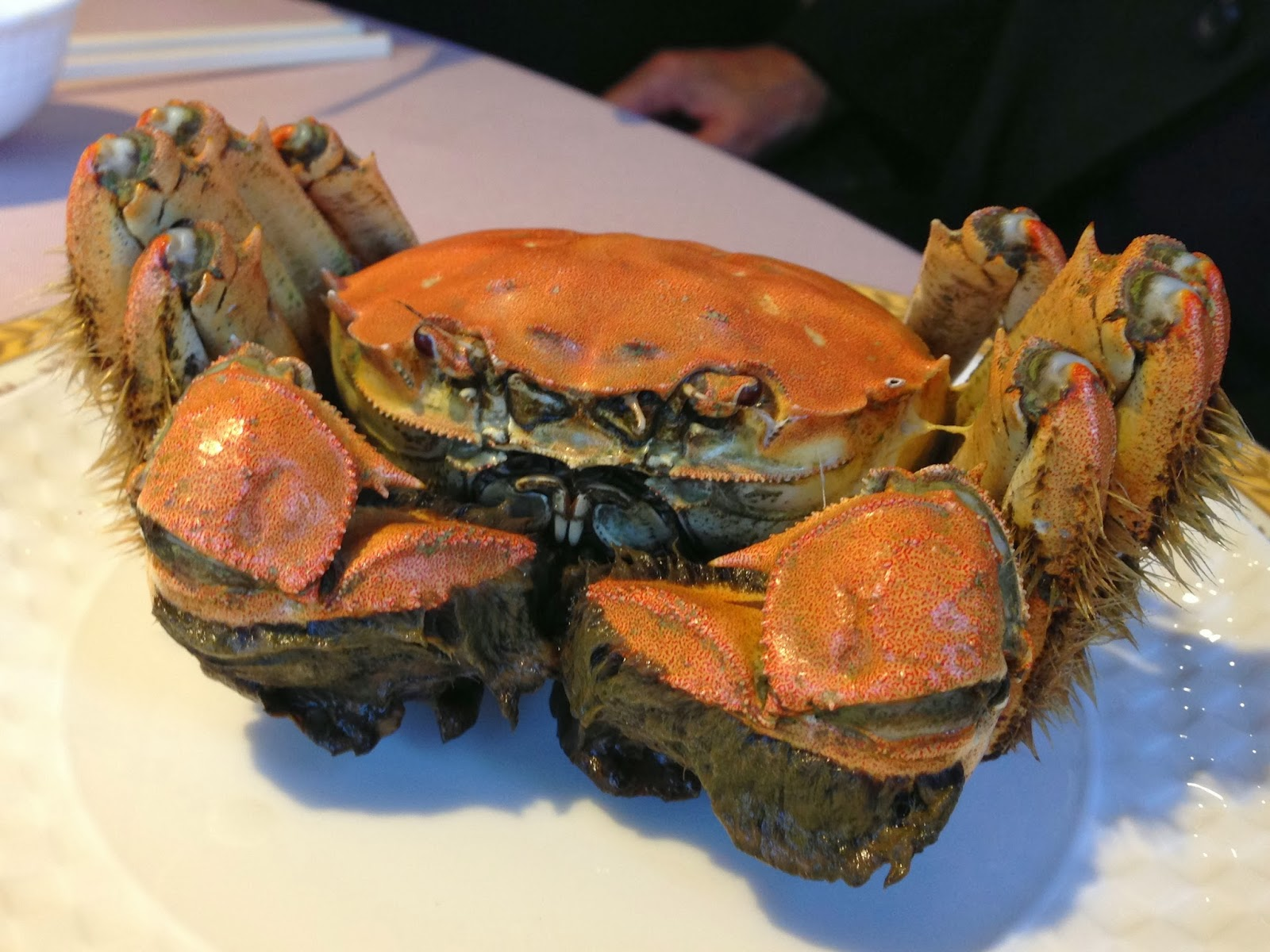 Shanghai Hairy Crab (Mitten crab Da zha xie) imported from ...
