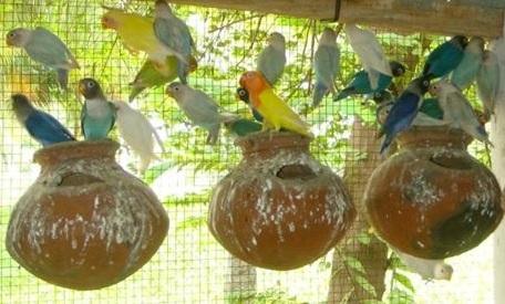 Birds online shopping india