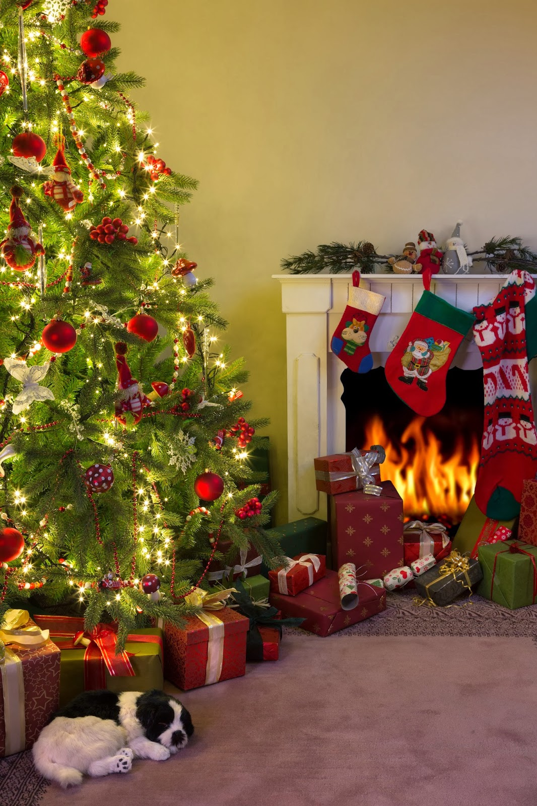 Don T Let Your Christmas Tree Become A Fire Hazard