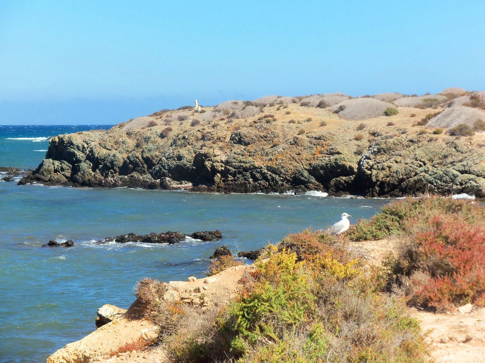 La ondina inquieta la isla de tabarca - Hoteles en isla tabarca ...