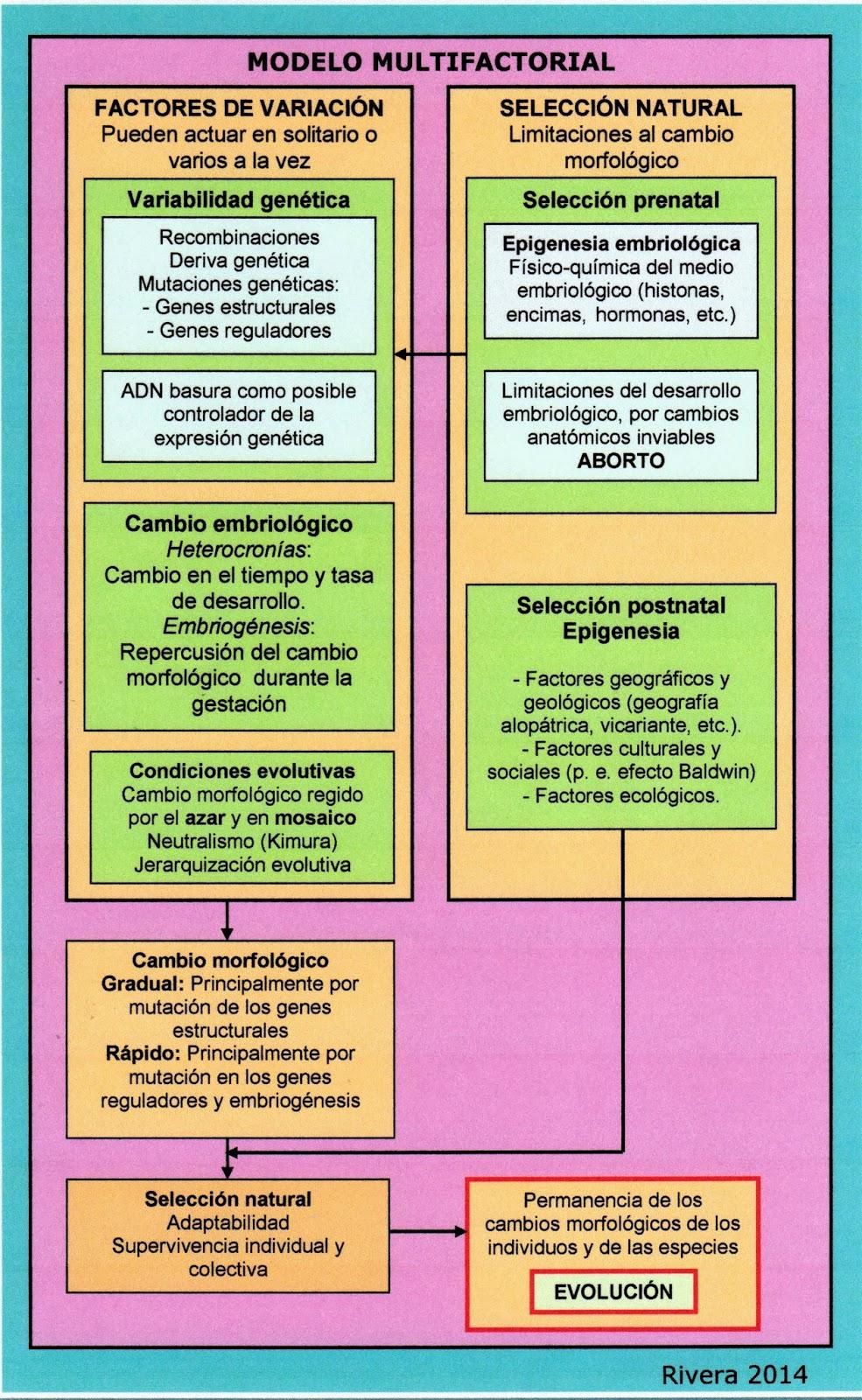 Psicobiología del género Homo: Evolución neurológica: un enfoque ...