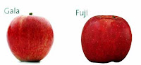 Variedades de maça Fuji e Gala