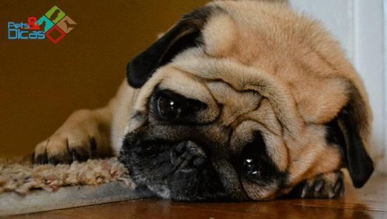 Cachorro triste e sozinho em casa