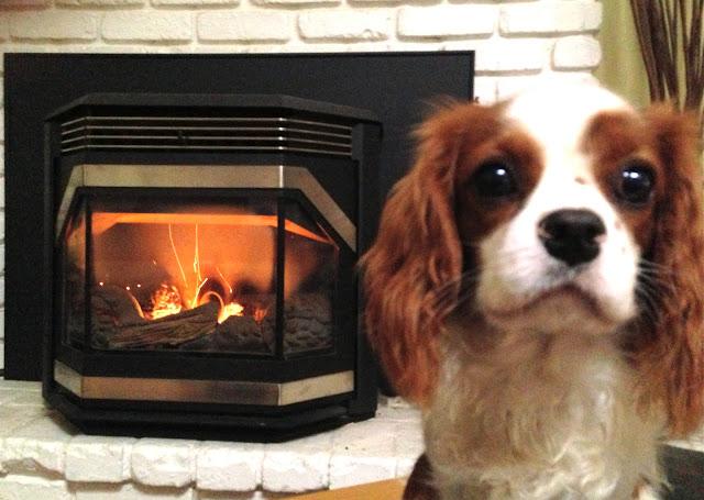 Baxter the quilt shop mascot