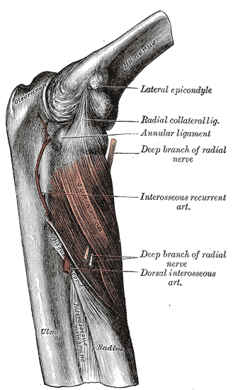 elbow pain, forearm, pain grip, difficulties grip, finger