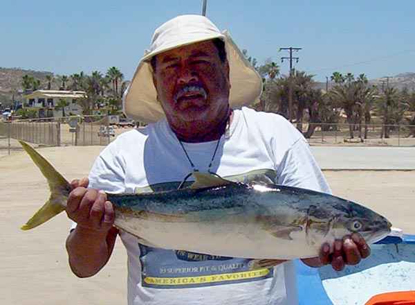 CHEF SAMBRANO: Yellow Fin or Yellow Tail? Maui Fish Info