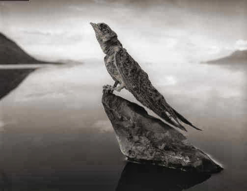 Calcified swallow. Amazing swallow