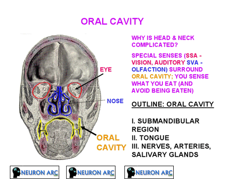 ORAL CAVITY PPT