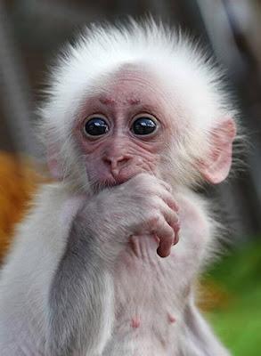 Funny Baby Animal