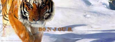 Couverture facebook Bonjour tigre