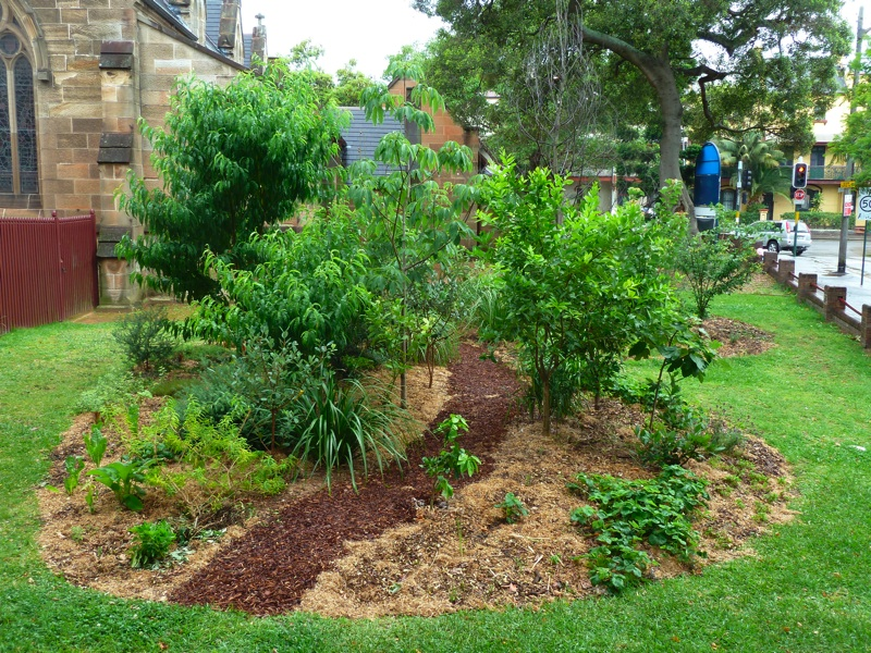 Food Forest Backyard : Food Forest  18 months on
