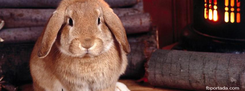 Conejo En La Casa