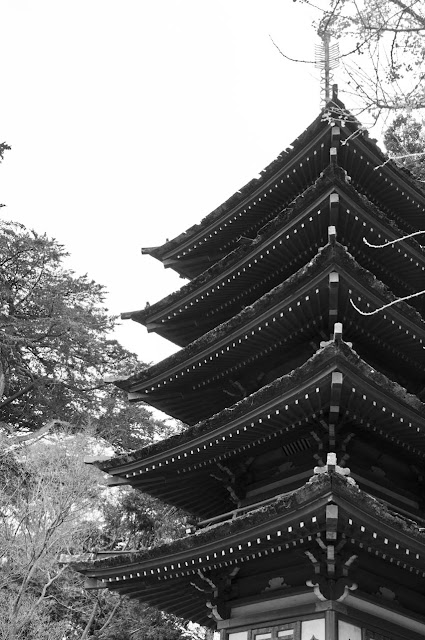 Green-Pear-Diaries-Fotografías-San-Francisco-Japanese-Tea-Garden_Alexandra-Proaño