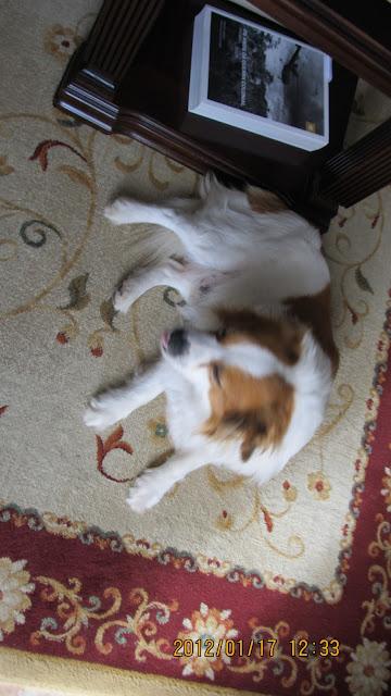 cão, animal, filomenacrochetblogspot.com