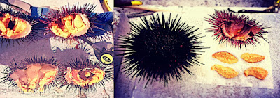 best sea urchin San Diego, fresh, whole, live, local, farmers markets, eating uni out of the shell