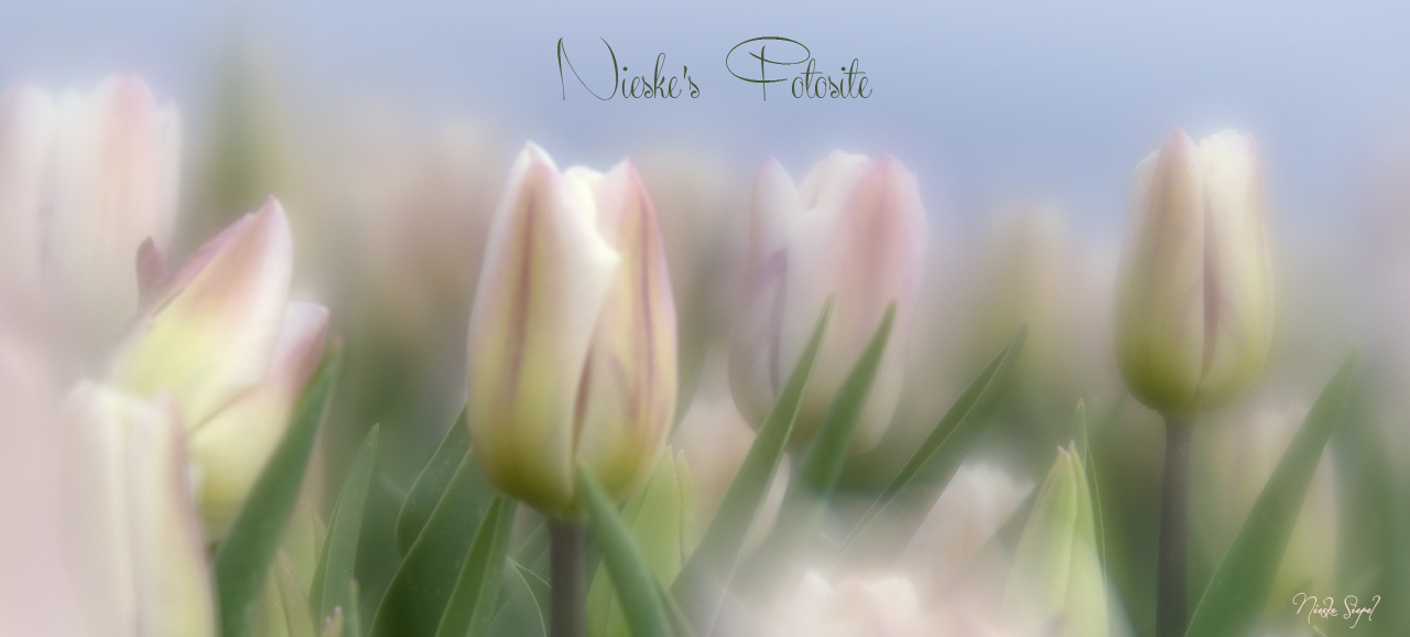 Nieske's fotosite