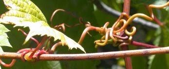 Northamerican Alied Fruit Experimenters
