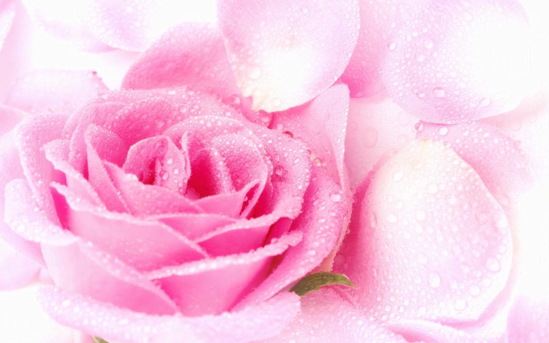 http://1.bp.blogspot.com/-w69AGdkRIOM/URosXrclByI/AAAAAAAAVBI/9dkGY4-Sxjs/s1600/Rose-Wallpaper-24.jpg