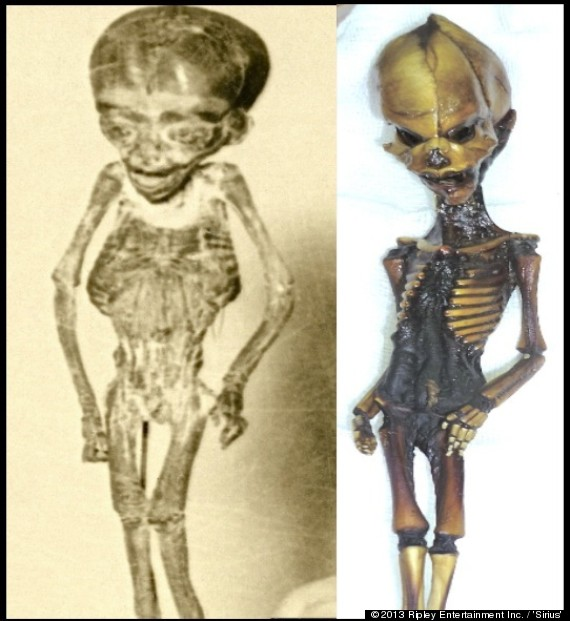 Ata -- The So-Called '6-Inch Alien' -- May Have An Earthling Cousin, And Ripley's Wants To Find Him