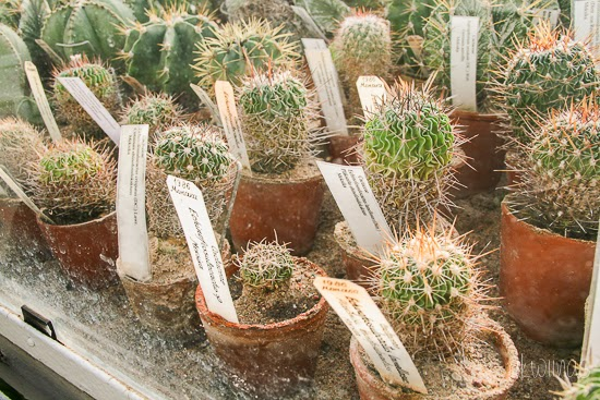 A lot of cactus in National Botanic garden