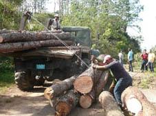 Empresa Forestal Gran Piedra Baconao