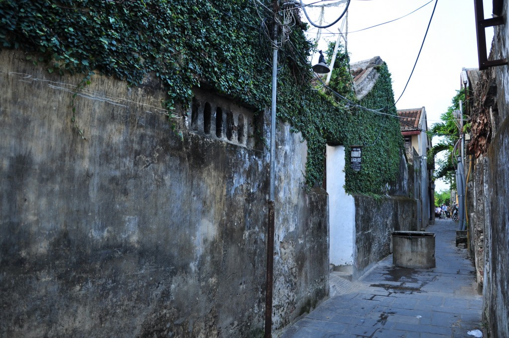 Trồng cây thằn lằn bám tường nhà, một nét đẹp lạ lẫm