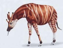 jirafas prehistoricas Giraffokeryx