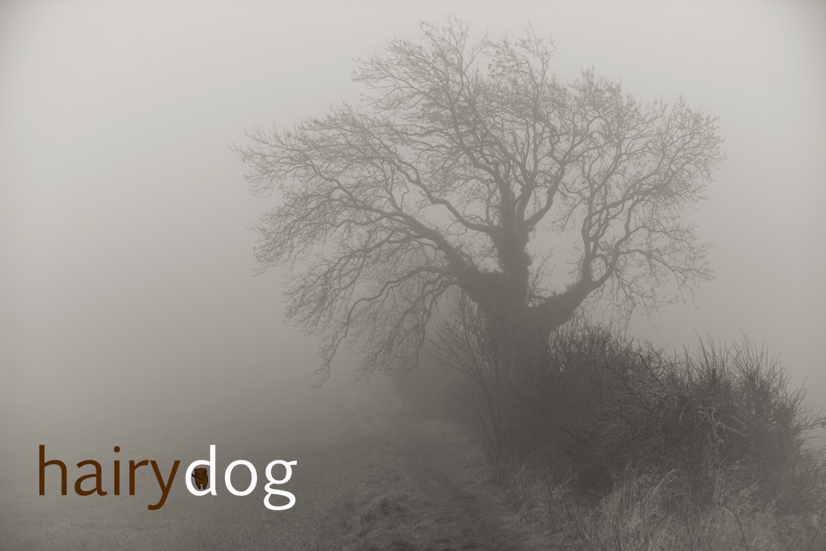 Photo of a misty Durham landscape by Jamie Emerson of Hairy Dog