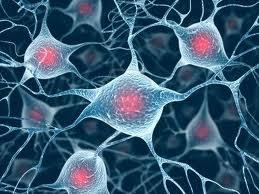 Trapiantare nuovi neuroni nel cervello