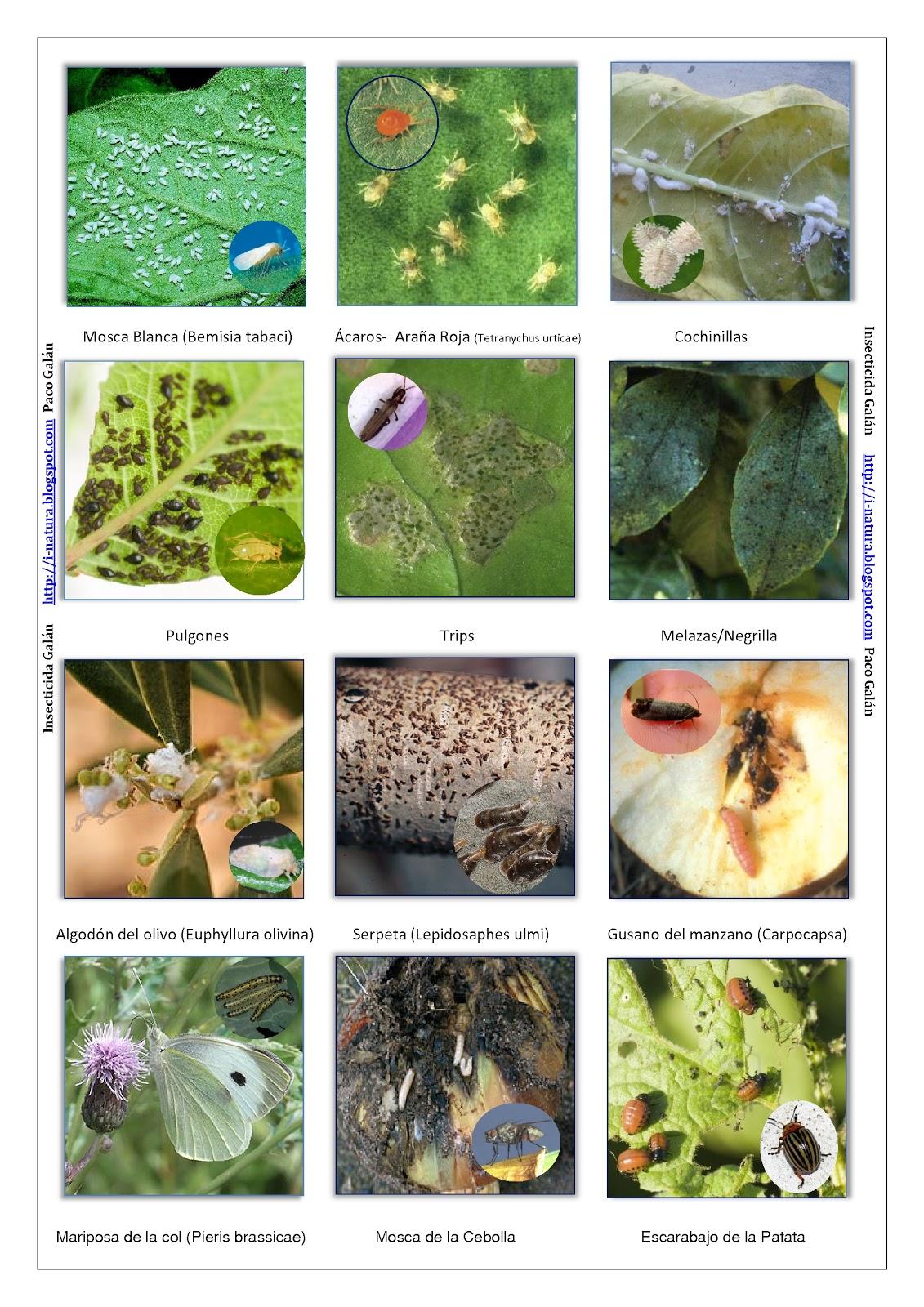 I natura insecticida casero y ecologico gal n para huerto for Jardin y natura