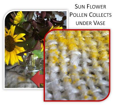 sun flower pollen hopi