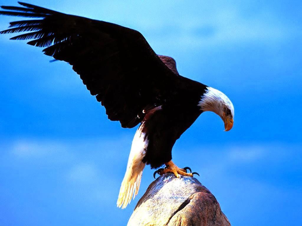Soar like an EAGLE.....
