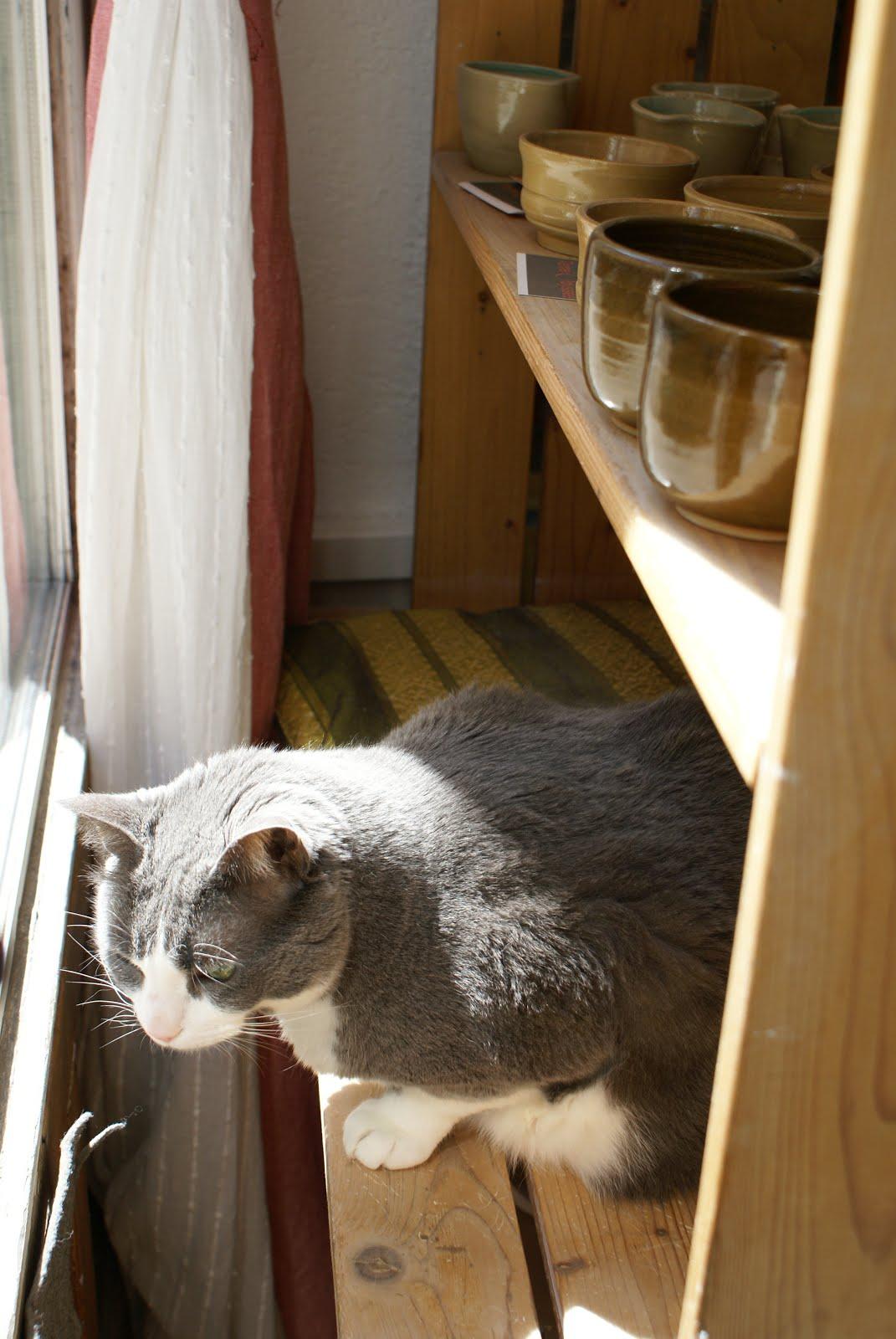 Matisse! Le Chat Potier!