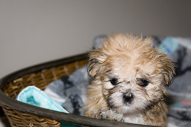 cute baby puppy pictures