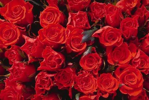 Fondos de amor: Fondos corazones y rosas amor