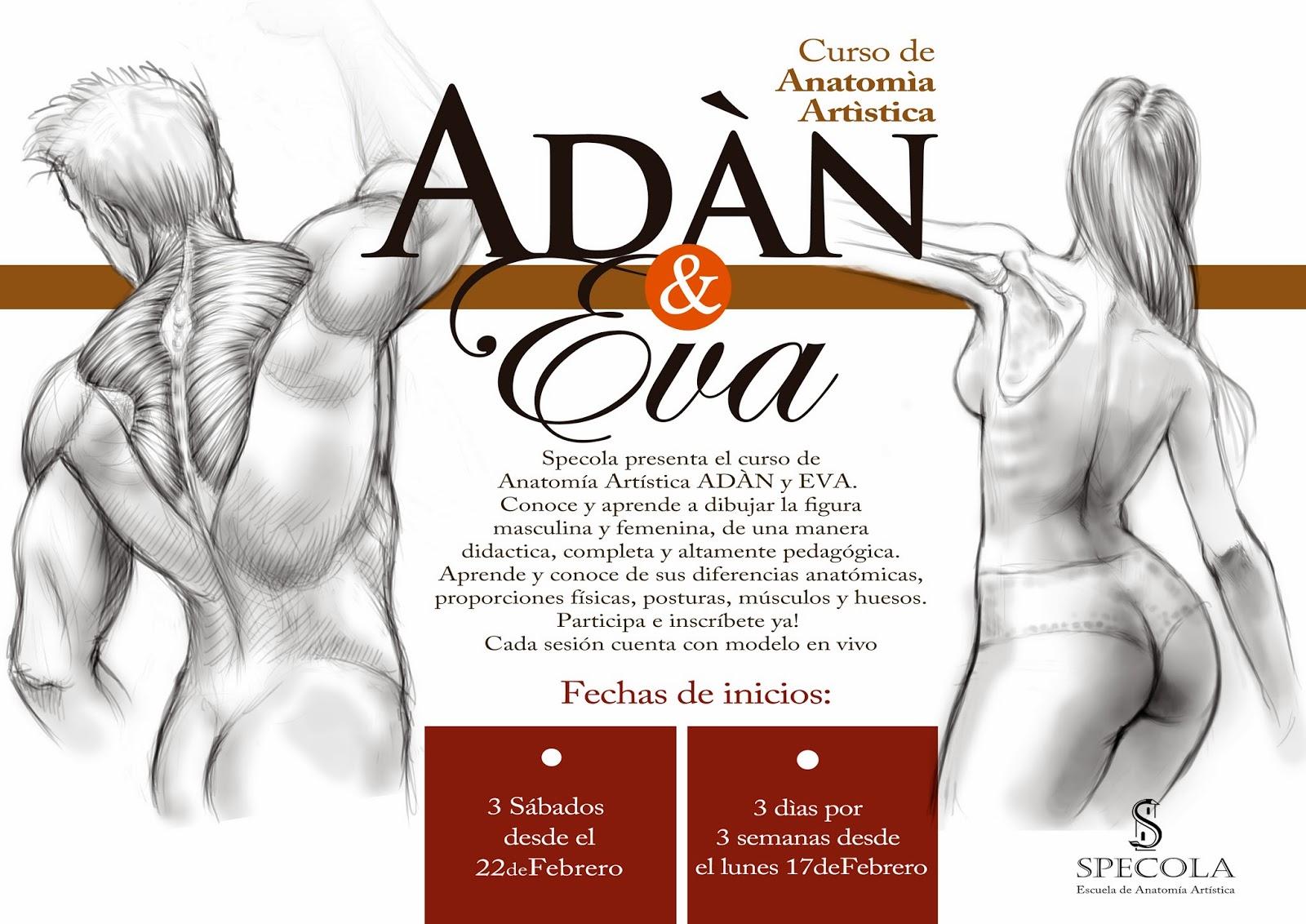 Encantador Dentro De La Anatomía Femenina Elaboración - Anatomía de ...