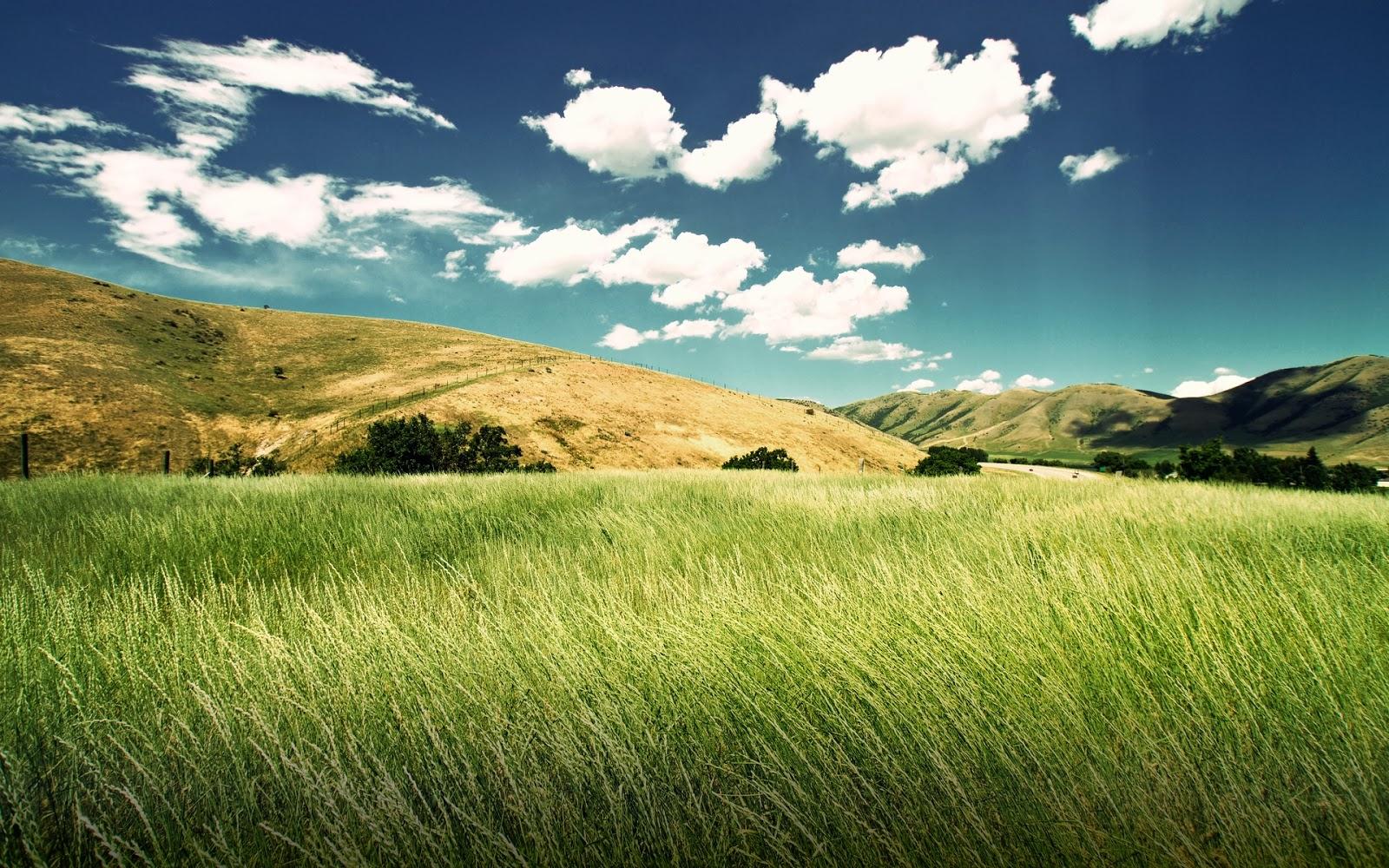 "<img src=""http://1.bp.blogspot.com/-w9AuX79axko/UuqwVOhtsnI/AAAAAAAAKuI/CY4xVIfboE0/s1600/natural-grass-wallpaper.jpg"" alt=""natural grass wallpaper"" />"