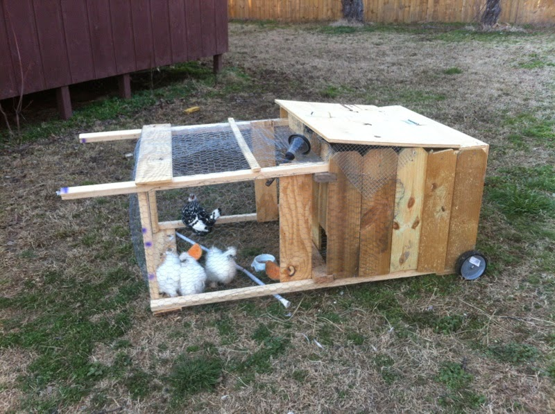 enlightenment my cheap chicken tractor