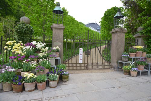 Latyrusliving: på besøg i claus dalbys have søndag den 19.maj 2013