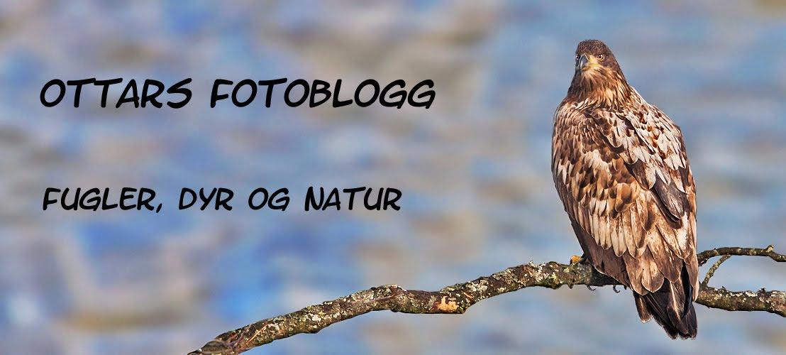 Ottars   fotoblogg